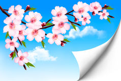 Spring background of a blossoming tree branch with Royalty Free Stock Images
