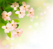 Spring background with blossoming tree brunch Royalty Free Stock Images