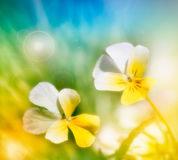 Spring background (blurred) Royalty Free Stock Image