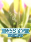 Spring background. Blurred tulips bouquet Royalty Free Stock Image