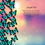 Spring background with butterflies Royalty Free Stock Images