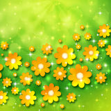 Spring background with chamomiles Royalty Free Stock Photo