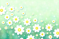 Spring background with chamomiles Royalty Free Stock Photos
