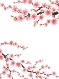 Spring background with cherry blossom. EPS 10 royalty free illustration