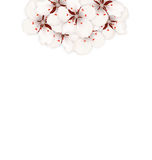 Spring Background with Cherry Blossom, Place for Text Stock Images