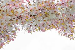 Spring background, cherry blossom trees landscape.  stock photography