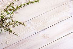 Spring background. Cherry flowers on a wooden background. Selective focus. Copy space. Banner. Springtime concept stock image