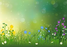 Spring Background with Colorful Flowers. And Green Grass - Illustration with Bokeh Light Effects on Defocused Background, Vector Stock Images
