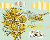 Spring background with crocuses and bird Stock Photos