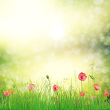 Field of poppy flowers. Spring background with 3d fresh green grass and poppy flowers over bokeh background Royalty Free Stock Photos
