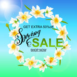 Spring background with daffodil narcissus flowers and blue sky. Royalty Free Stock Images