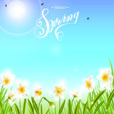 Spring background with daffodil narcissus flowers, green grass, swallows and blue sky. Stock Photo