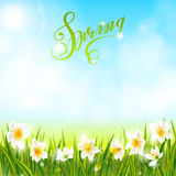 Spring background with daffodil narcissus flowers, green grass, swallows and blue sky. Royalty Free Stock Images