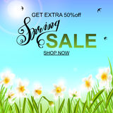 Spring background with daffodil narcissus flowers, green grass, swallows and blue sky. Royalty Free Stock Photo