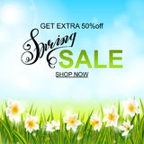 Spring background with daffodil narcissus flowers, green grass, swallows and blue sky. Stock Images