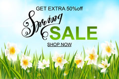 Spring background with daffodil narcissus flowers, green grass, swallows and blue sky. Royalty Free Stock Photography
