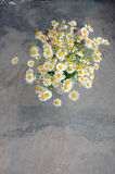 Spring background with daisies Stock Photos