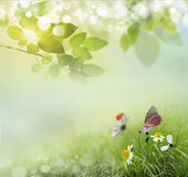 Spring background with daisies. Stock Image