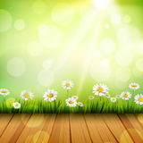 Spring Background With Daisies. Spring background with wooden floor grass white daisy flowers and sun vector illustration Royalty Free Stock Image