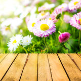 Spring background daisies wooden panel stock photos
