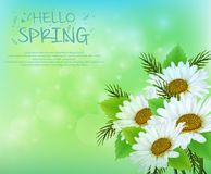 Spring background with daisy flowers. Illustration of Spring background with daisy flowers Royalty Free Stock Image
