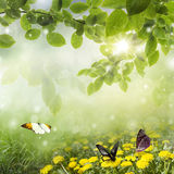 Spring background . dandelion in a meadow and butterfly stock photography