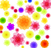 Spring background for the design of Colorful flowers Vector illustration Stock Photos