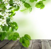 Spring Background with Empty Grey Wooden Table. Green Apple and Linden Leaves and White Flowers Royalty Free Stock Photos