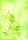 Spring  background. EPS 10 Royalty Free Stock Image