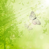 Spring background. Spring floral background with butterflies Stock Photos
