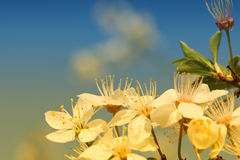 Spring background. Flower blue sky green yelow royalty free stock photography
