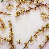 Spring background of flowering branches with white flowers Stock Images