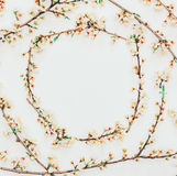 Spring background from flowering branches with white flowers Royalty Free Stock Photo