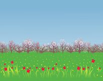 Spring background with a flowering garden Royalty Free Stock Photography