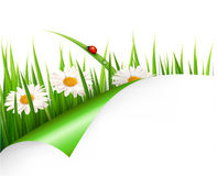 Spring background with flowers,. Grass and a ladybug. Vector stock illustration