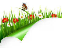 Spring background with flowers Stock Photography