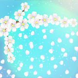 Spring background of flowers with apricot petals Stock Photo