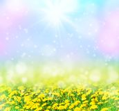 Spring background with flowers stock photo