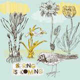 Spring background with flowers and bird Stock Image