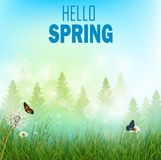 Spring background with flowers and butterflies in meadow and pine trees Royalty Free Stock Photo