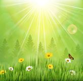 Spring background with flowers and butterflies in meadow and pine trees Stock Images