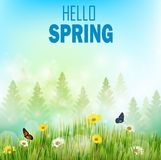 Spring background with flowers and butterflies in meadow and pine trees. Illustration of Spring background with flowers and butterflies in meadow and pine trees Royalty Free Stock Photography