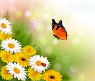 Spring background. Flowers and a butterfly. Royalty Free Stock Photography