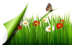 Spring background with flowers Royalty Free Stock Image