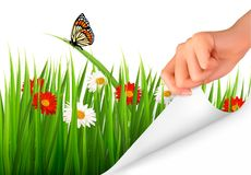 Spring background with flowers, grass and a hand. Stock Photo