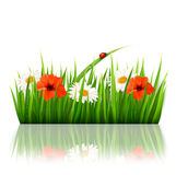 Spring background with flowers, grass and a ladybu Royalty Free Stock Photos