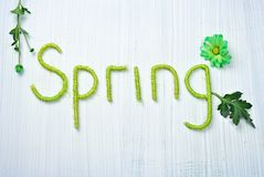 Spring Background with flowers Royalty Free Stock Images
