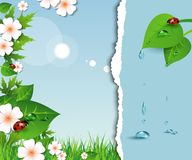 Spring background with flowers, leaves and ladybug Stock Image