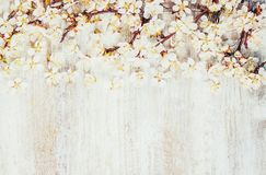 Spring background, flowers. royalty free stock images