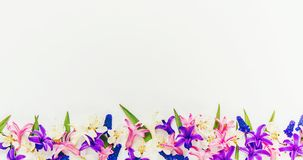 Spring background, flowers. stock photo